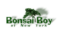 bonsai-boy